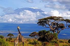 Tour Châu Phi